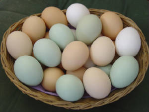 basketofeggs.jpg