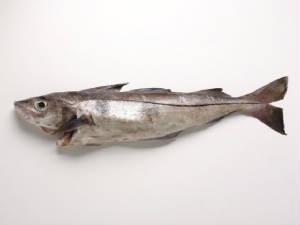 haddock.jpg